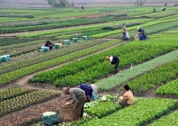 Planting the seed: Opportunities in Vietnamese agriculture